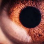 In new cognitive research from Princeton, people's eyes reveal that clichés are underrated